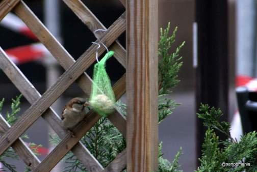 2011/11/13;雀の食事