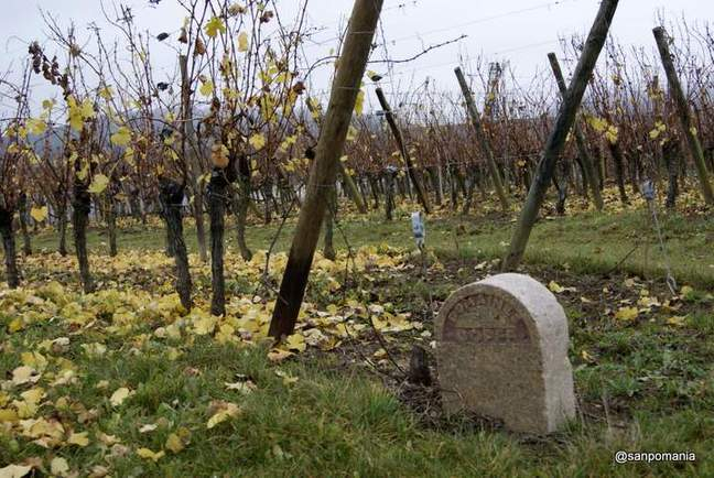 2011/11/15;Domaines dopffの畑
