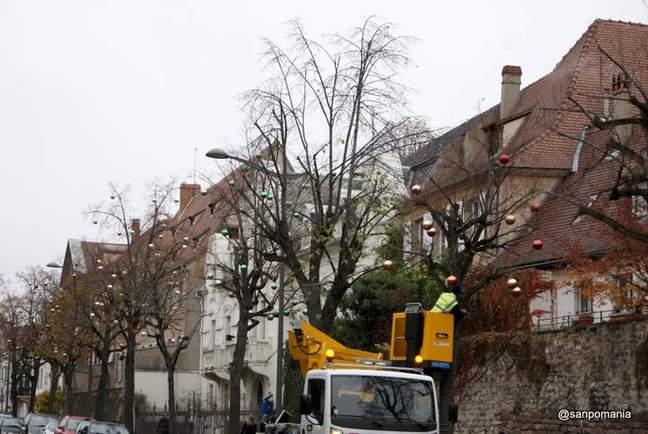 2011/11/15;街路樹の飾りつけはまだ途中