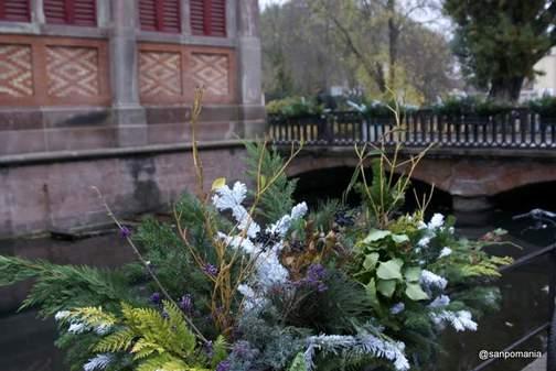 2011/11/17;川沿いのお花もクリスマス仕様