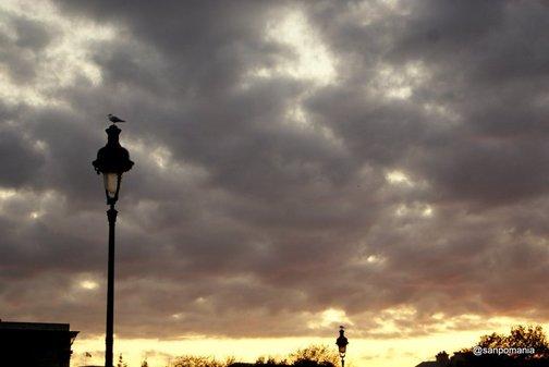 2011/11/18;何故か街灯に一輪づつカモメが止まっている