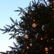 :クリスマスツリー@銀座