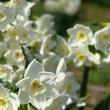 :花の季節の皇居散歩