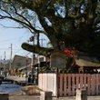 上賀茂の社家町と藤木社