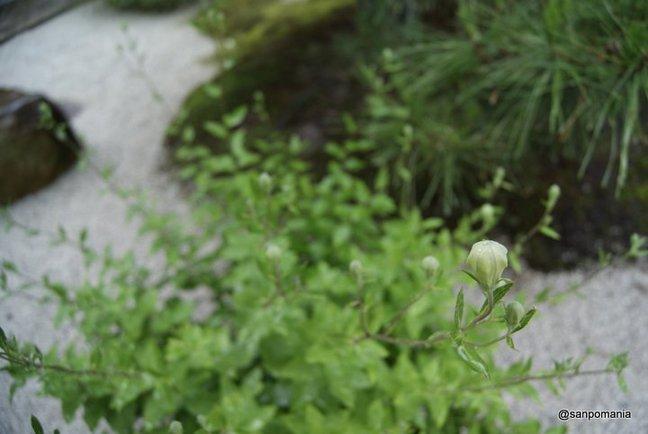 2012/06/19;光明院 波心庭の桔梗