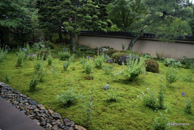 2012/06/19;天得院の庭