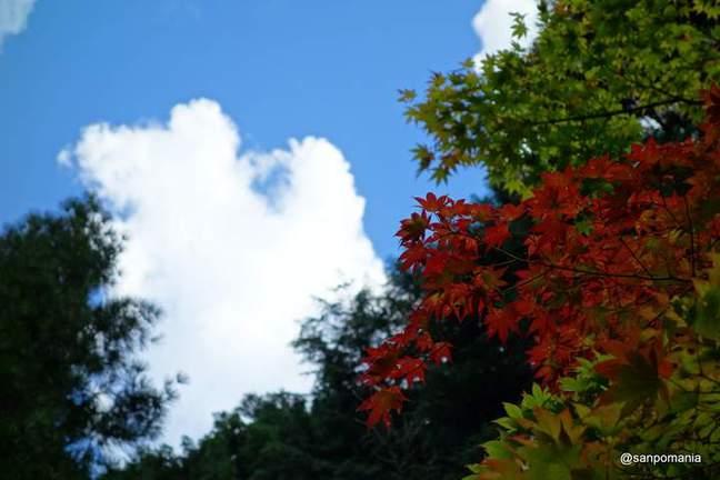 2012/09/16;赤と緑のモミジと空の青と雲の白