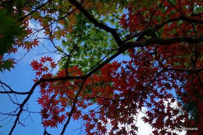2012/09/16;葉の一枚一枚がきれい