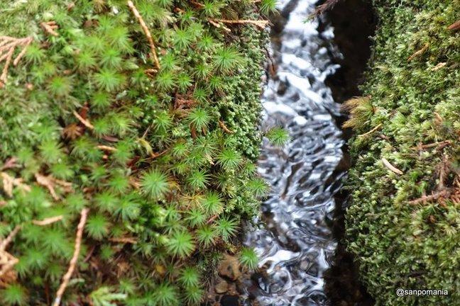 2013/01/19;水でぬれてつやつやとした苔