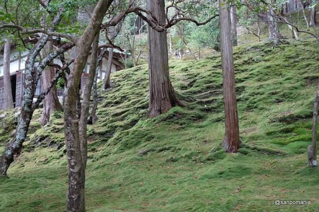 2013/01/19;やはり日陰の方が苔の色がきれいだ。