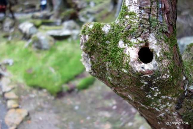 2013/01/19;木の洞の周りにも苔