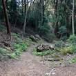 :尊勝院からの京都一周トレイルコース