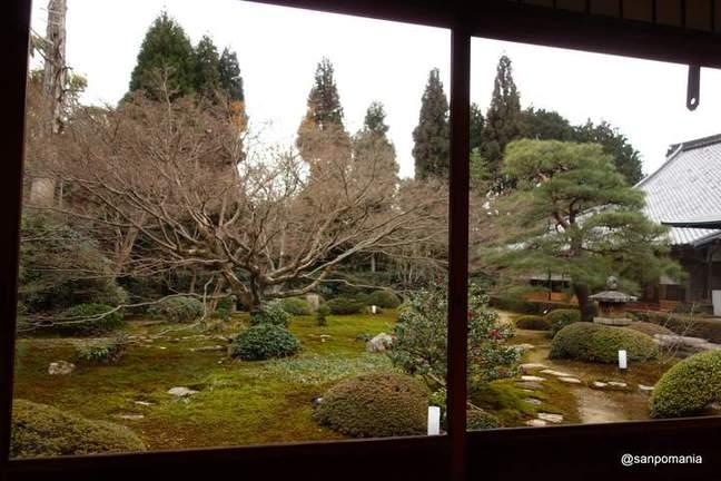 2013/01/20;新荘 悟りの間の大きなカエデの木;雲龍院