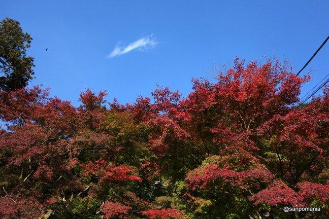 2014/11/23;半僧坊に向かう山道;建長寺