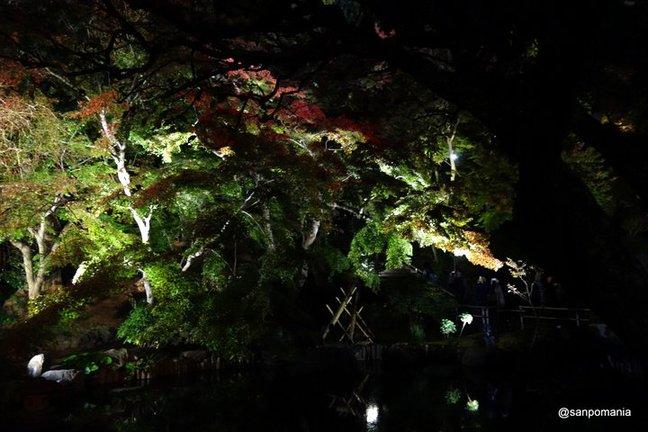 2014/11/23;池の周りのモミジはまだ緑が目立つ;長谷寺