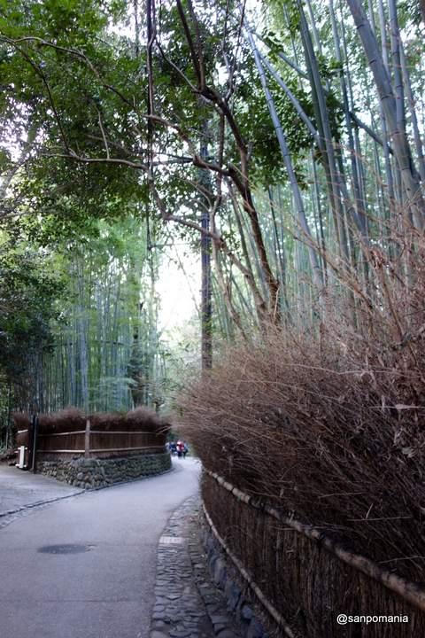 2013/01/19;嵯峨野の竹林