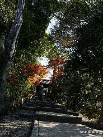 2008/12/13;台所坂を上って高台寺へ