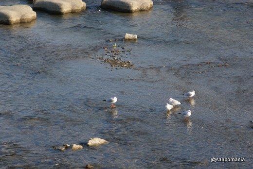 2010/12/05;水辺で遊ぶ鳥