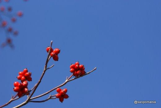 2010/12/05;冬の木の実