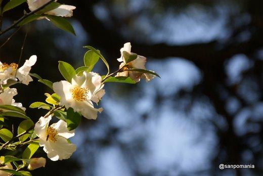 2010/12/05;冬の花