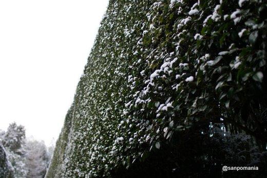 2011/01/10;銀閣寺の銀閣寺垣