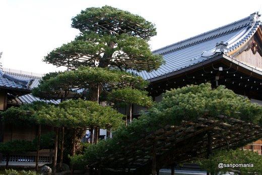 2011/01/10;金閣寺の陸舟の松