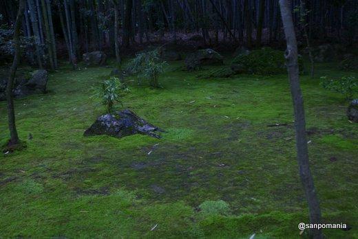 2011/06/12;高桐院の前庭