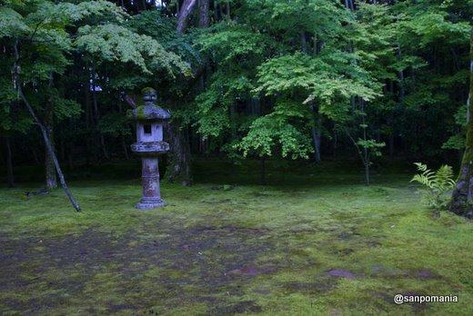 2011/06/12;高桐院の庭
