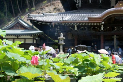 2011/06/25;三室戸寺本堂前と蓮