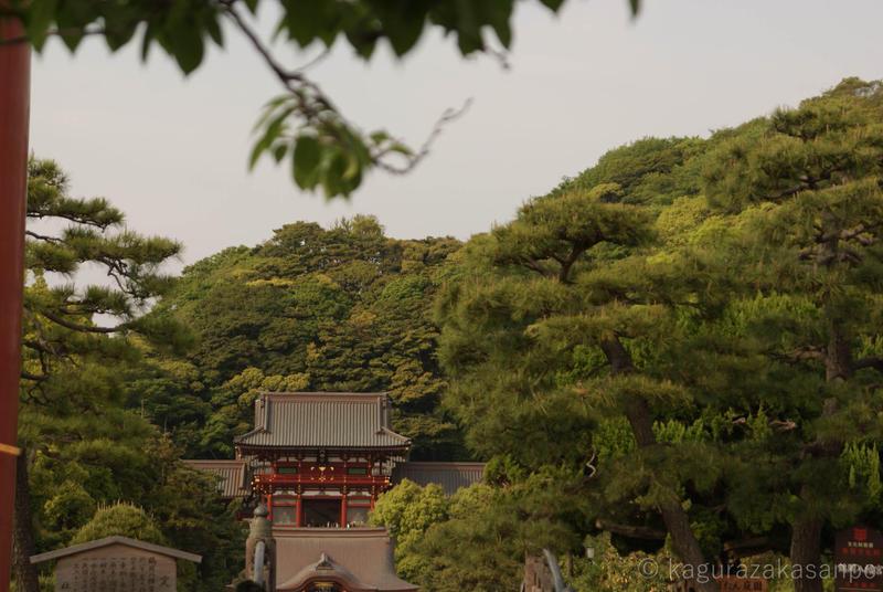 kamakura_hachimangu_20110505-160956.jpg