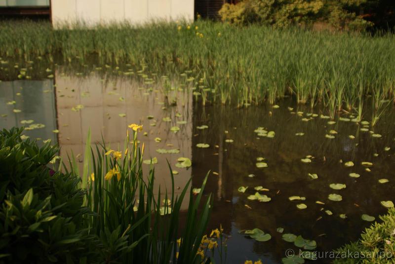 kamakura_hachimangu_20110505-163545.jpg