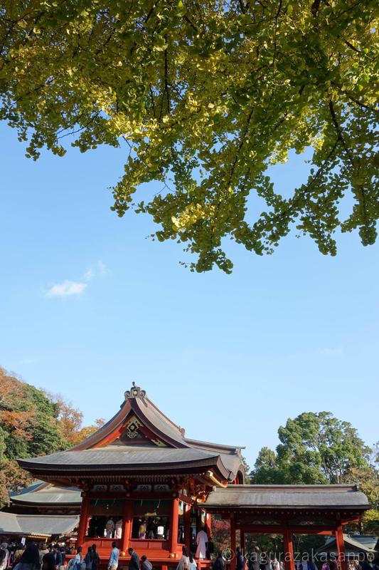 kamakura_hachimangu_20141123-142824-2.jpg