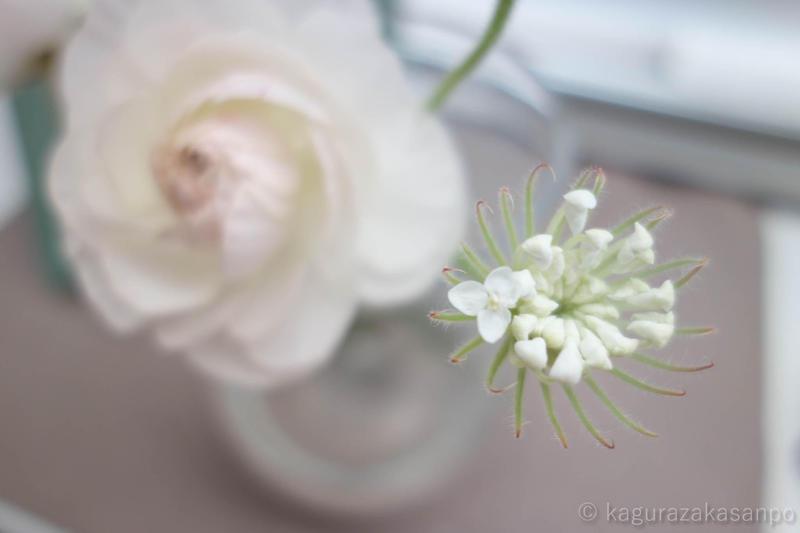 kagurazaka_jarnos_20150326-084156.jpg